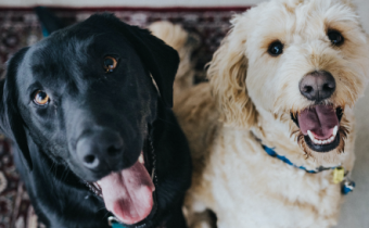 Pets in sectional title schemes